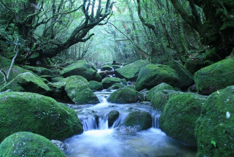 A natural UNESCO World Heritage site, Yakushima is an island in southern Japan t...