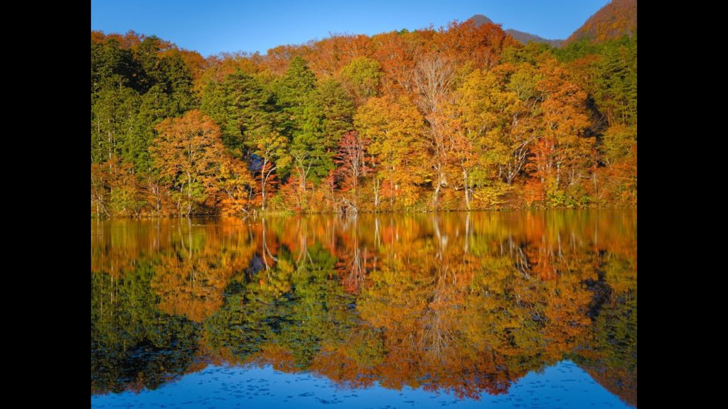 JG☆☆☆8K HDR 福島 観音沼の鏡面紅葉 Fukushima,Mirror Image of Kannonnuma in Autumn