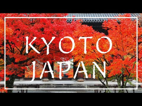 JAPAN SIGHTSEEING KYOTO FOOTAGE 京都 風景集 紅葉