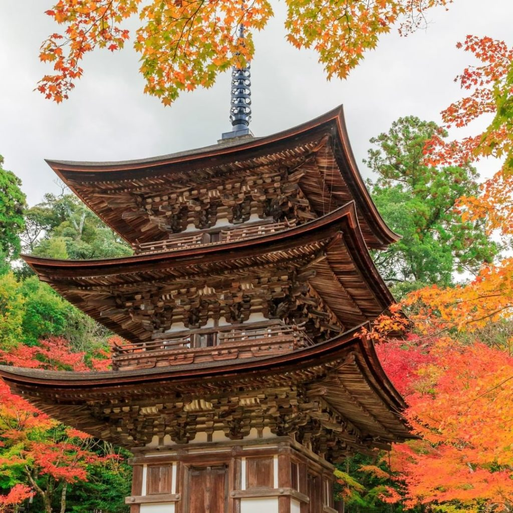 Saimyoji Temple in Shiga Prefecture is surrounded by a garden filled with over 1...