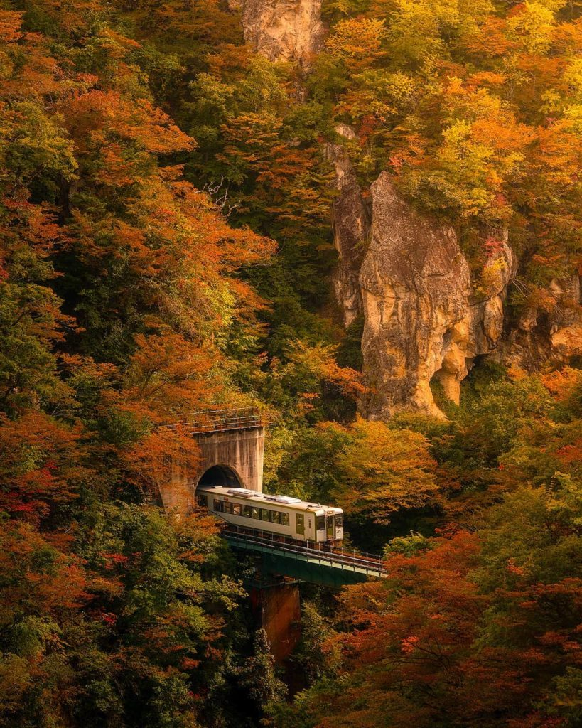 Have you seen autumn colours like this? In the Tohoku area, autumn starts around...