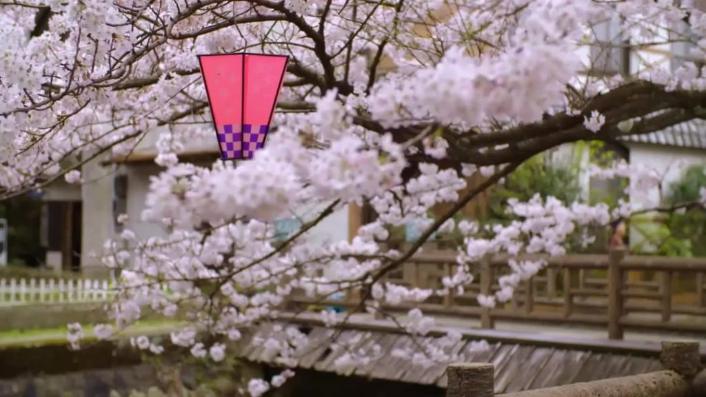 Thinking of visiting Japan during the spring cherry blossom season?  The sakura ...
