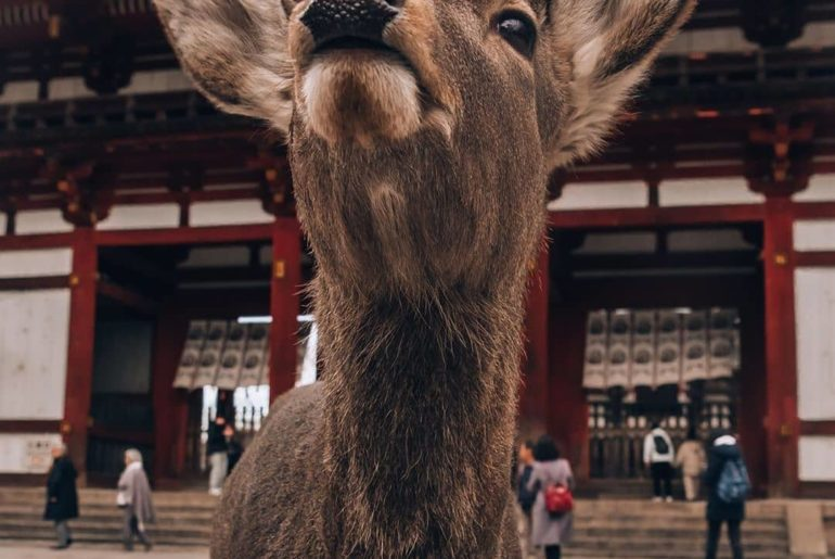 Did you know Nara is the sister city of Canberra? Nara Park is just a 45-minute ...