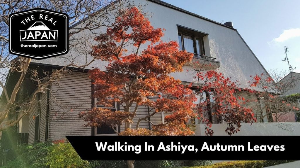 Walking In Ashiya, Autumn Leaves - Livestream | The Real Japan | HD