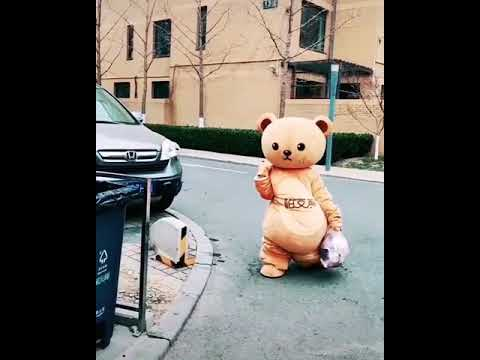 Funny brown bear video| Mascot japanese brown bear.