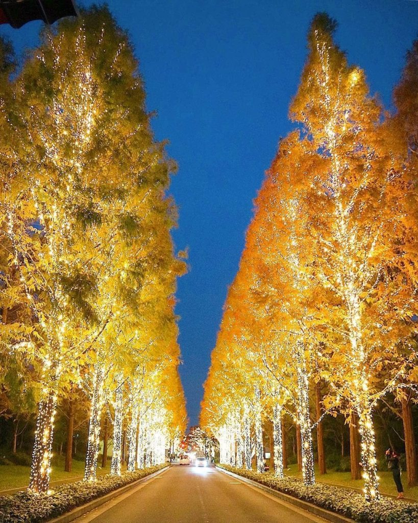 Enjoy admiring swathes of trees and parks lit up with over 800,000 bulbs? Kyoto...